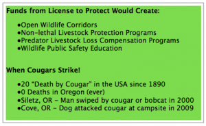 cougarsstrike 300x184 Co Existing with Cougars: Are We the Real Predators?