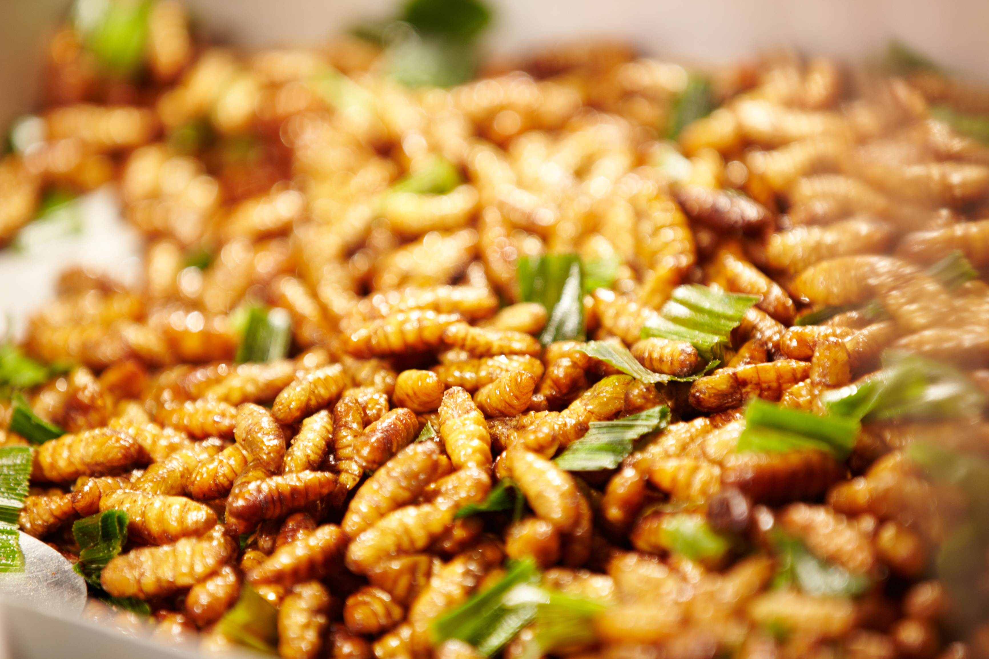 Image result for Fried Bee Pupae
