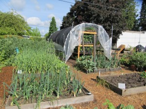 Hoop house and garden