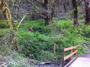 mulkey creek