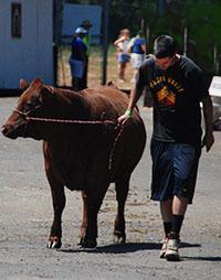 benton county fair and rodeo