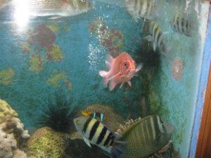 aquaponicfish
