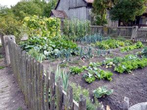 p10_Organic Growers