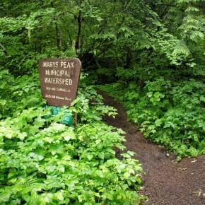 Mary's peak trail