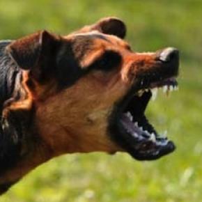 aggressive-dog2