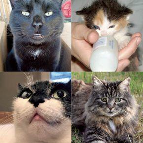 anthony-animals