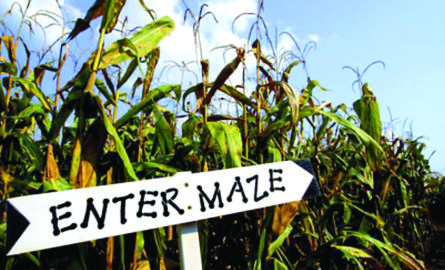 Mazes of Maize: Your Guide to Getting Lost