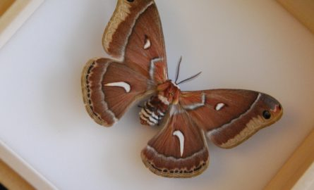 Butterfly and Moth Weekend Workshops