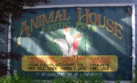 Meet Animal House's Dave Stepnicka