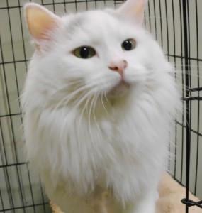 heartland kitty