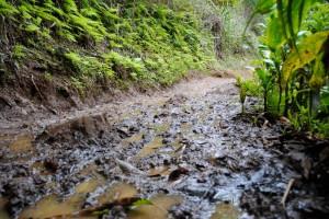 muddytrail