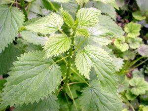 leaves_750