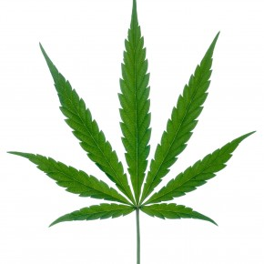 Marijuana leaf with stipe