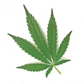 pot_leaf