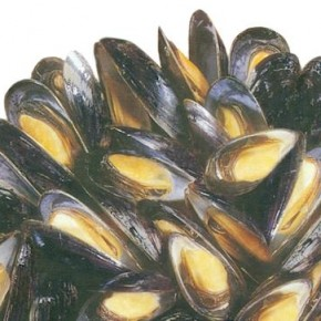 mussels-500